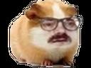 :Hamster_lunette: