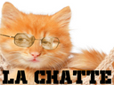 :chatte: