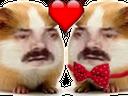 :Hamster_amoureux: