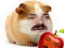 :Hamster_pomme: