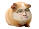 :Hamster_debile: