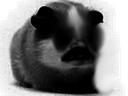 :Dark_hamster: