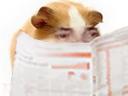 :Hamster_journal: